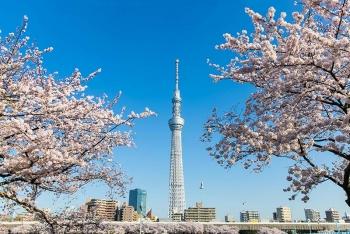 9 điểm tham quan hấp dẫn nhất Tokyo, Nhật Bản